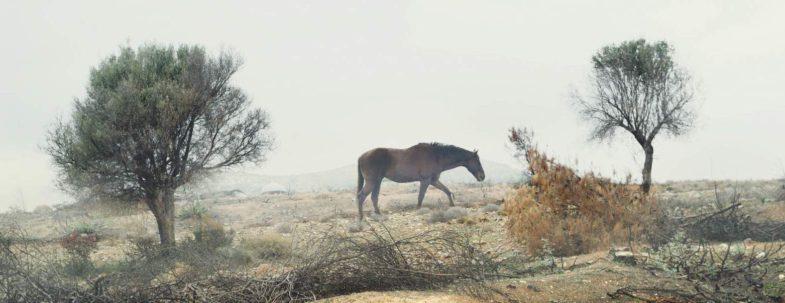 sans cheval_cheval